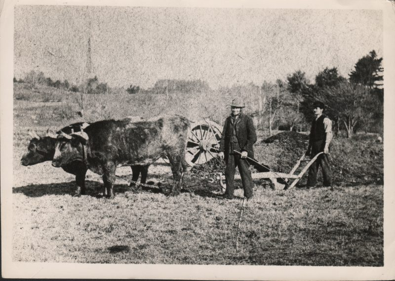 Old black and white photo of men plowing the field