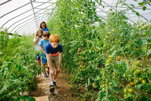 Kids walking through a flourishing greenhouse looking for ripe tomatoes