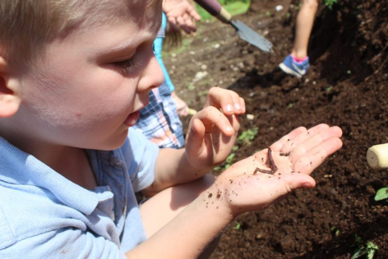 Young boy learning how worms helps gardens.