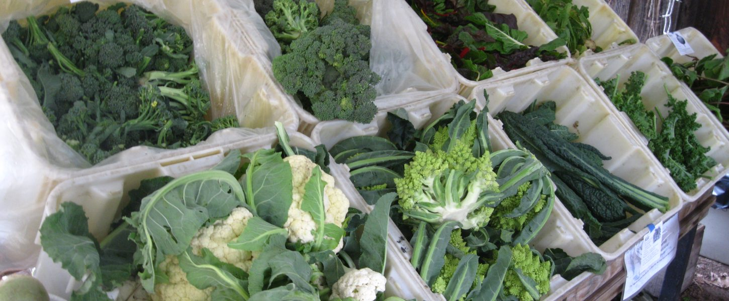 cartons of cauliflower, broccoli and other leafy veggies for sale