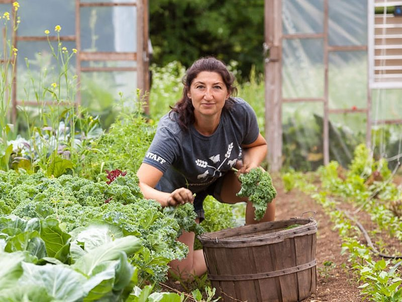 Woman looks up to the camera while gathering kale from the garden.
