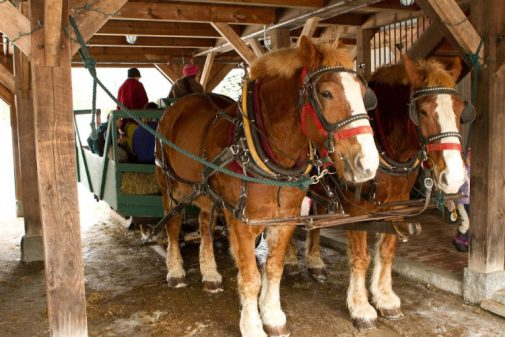 draft horses hooked up for a hay ride