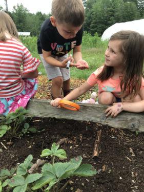 School children checking garden soil.