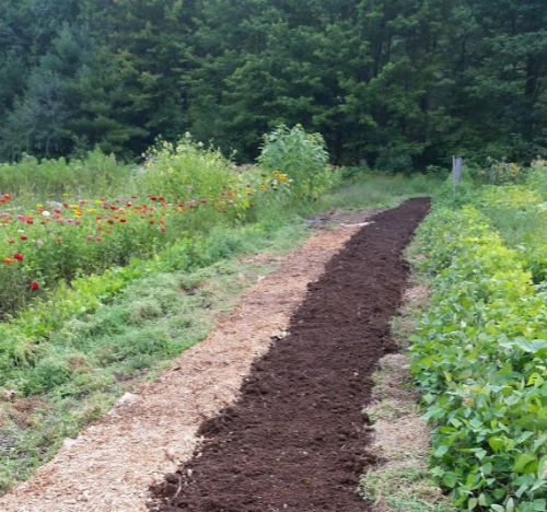 A long line of compost is laid out between rows of plants