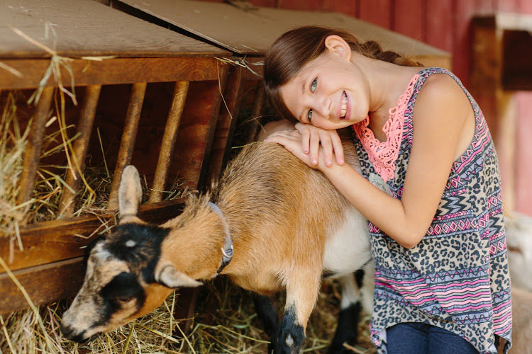A girl posing with a goat eating hay