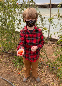 Young camper picking tomatoes.