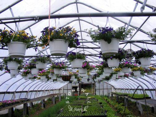 organic plant starts for garden.