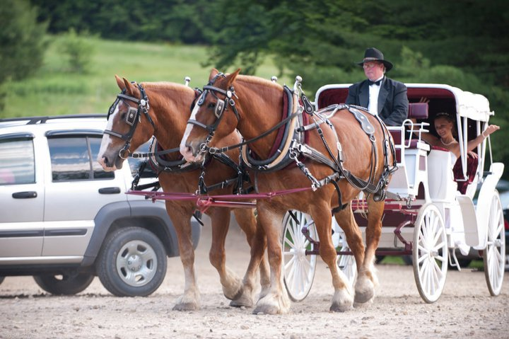 two horses pull a wedding cart, with bride waving in the back